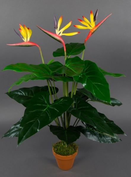 Strelitzie Real Touch 70cm im Topf ZJ künstliche Strelitzienpflanze Kunstblumen Paradiesvogelblume