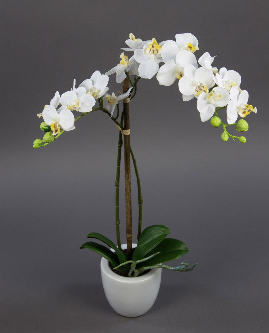 orchidee real touch 55cm wei mit 2 rispen ga kunstblumen. Black Bedroom Furniture Sets. Home Design Ideas