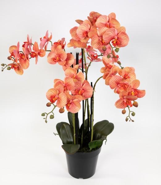 Orchidee 80x50cm Real Touch orange-peach CG künstliche Orchideen Blumen Kunstpflanzen Kunstblumen