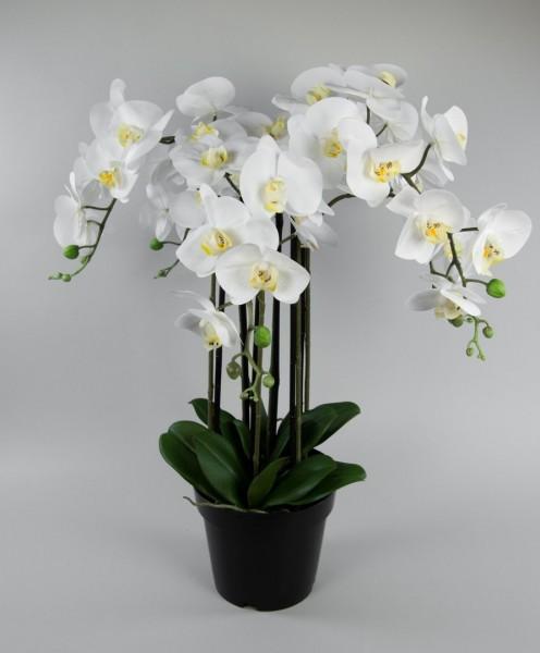 Orchidee 100x60cm Real Touch weiß CG künstliche Orchideen Blumen Kunstpflanzen Kunstblumen