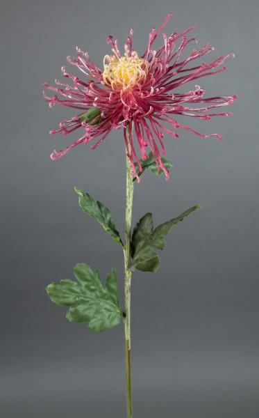 Spinnenchrysantheme 80x20cm altrosa-creme CG Kunstblumen künstliche Chrysantheme Blumen