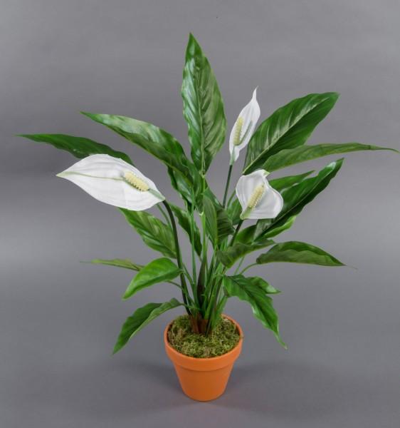 Spathiphyllum 50cm im Topf LM Kunstpflanzen künstliche Pflanzen