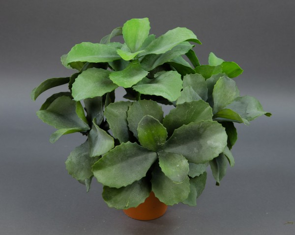 Große Sukkulente 36x36cm im Topf GA Kunstpflanzen künstliche Sukkulenten Pflanzen