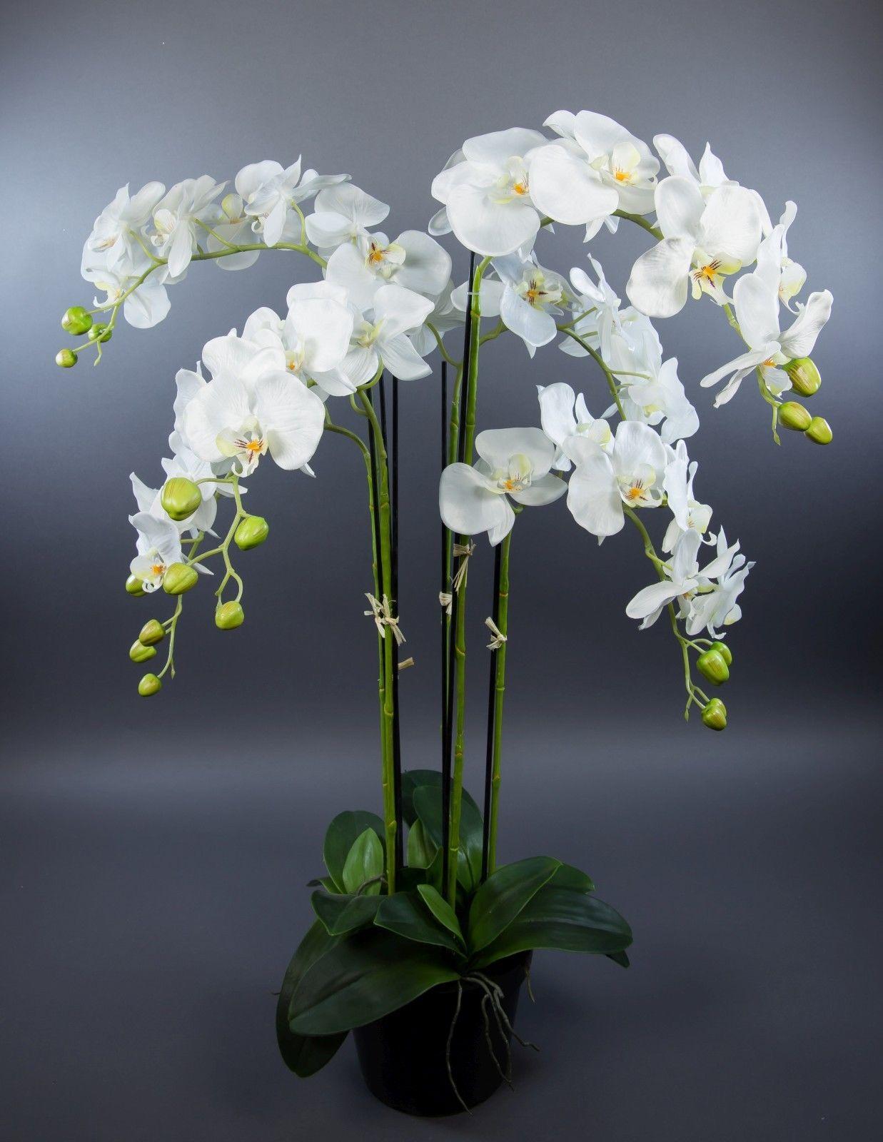orchidee 90x60cm wei ga kunstpflanzen k nstliche blumen orchideen kunstblumen orchidee. Black Bedroom Furniture Sets. Home Design Ideas