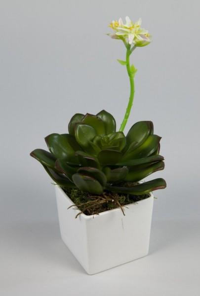 Sukkulente Echiveria mit Blüte 26cm im weißen Keramiktopf FI künstliche Pflanzen Kunstpflanzen