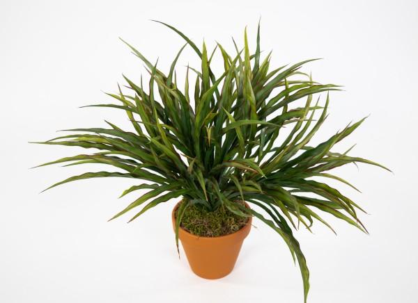 Dracenabusch 32x40cm grün-rot im Topf YF Kunstpflanzen künstliche Dracena Pflanze Drachenbaum Palme