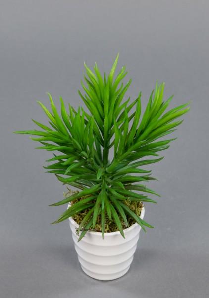 Sukkulente Crassula Tetraganu im weißen Dekotopf 20cm FI Kunstpflanzen künstliche Pflanzen