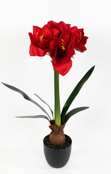 Amaryllis mit Zwiebel Real Touch 56cm rot im Topf DP künstliche Pflanze Blume Kunstblume Ritterstern