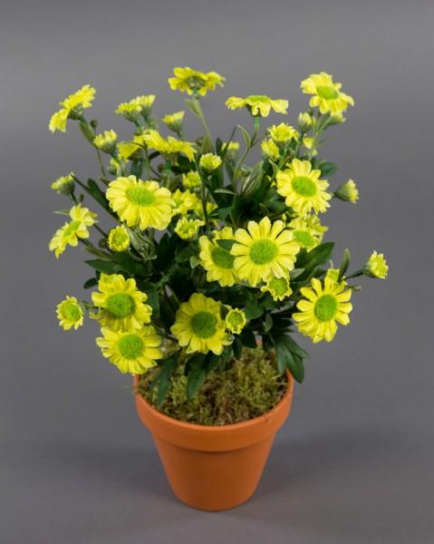 Margeritenbusch 32cm gelb im Topf ZF Kunstpflanzen künstliche Margerite Pflanze Blumen Kunstblu