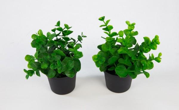 2 Stück Mini-Eukalyptus 13cm im Topf GA Kunstpflanzen künstliche Pflanzen Eukalyptus