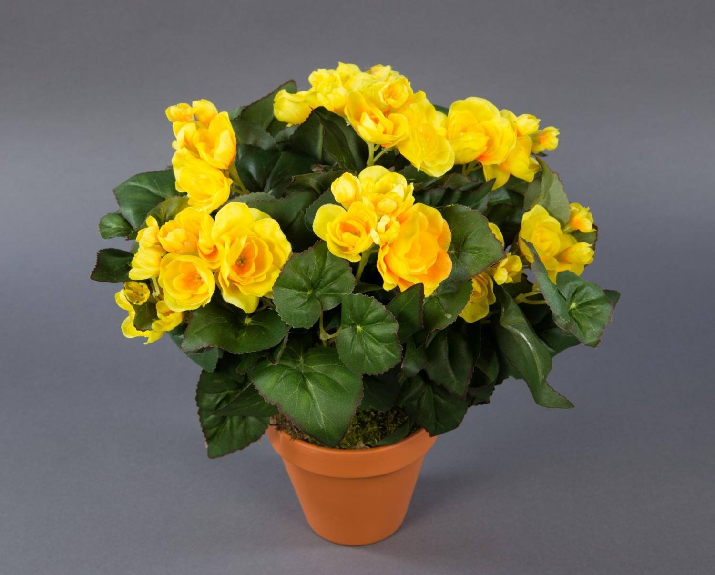 gro e begonie 32cm gelb im topf lm kunstpflanzen. Black Bedroom Furniture Sets. Home Design Ideas